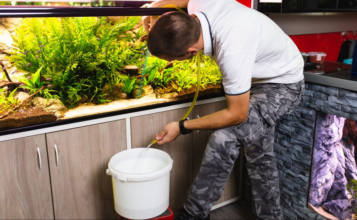 If you're new to owning a fish tank, it's important to understand the proper way to change aquarium water. In this photo, a man is using a siphon to drain some of the water out of a fish tank.