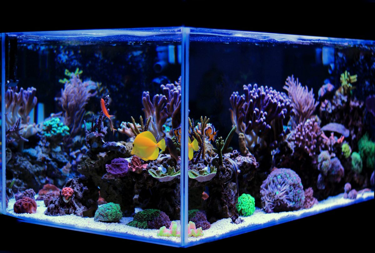 Changing aquarium water regularly is critical to the health of your livestock.