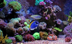 Beautiful coral is shown in an aquarium. Choosing brands of salt for saltwater fish tanks can really be confusing, but you have plenty of excellent options.