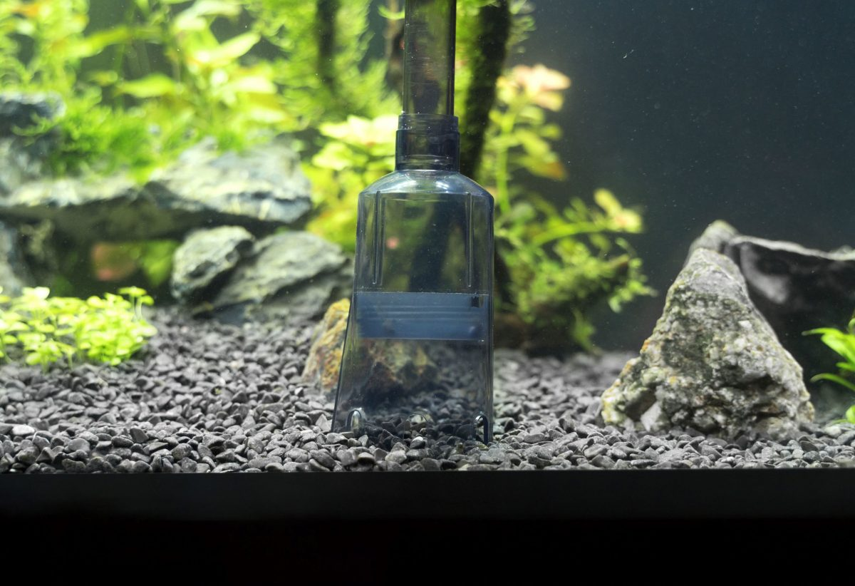 Fish tank accessories you will need to start an aquarium include gravel, a gravel cleaner, rock, and plants.