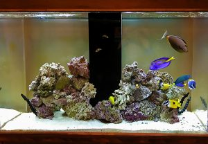 Seatech Aquariums and Seatech H2O owner Jimmie Hernandez owned a naso tang for 19 years.