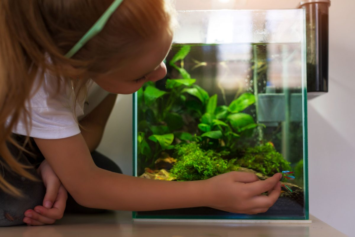 A girl admires the saltwater fish in a nano reef tank.