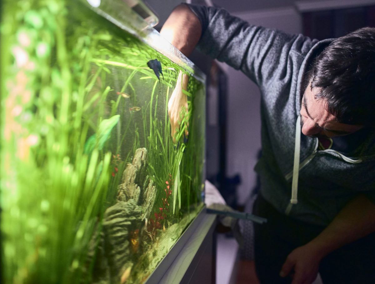 Knowing the do's and don't of cleaning a fish tank can make the process easier.