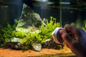 The do's and don'ts of cleaning a fish tank include using an algae scrubber inside and outside of the tank.