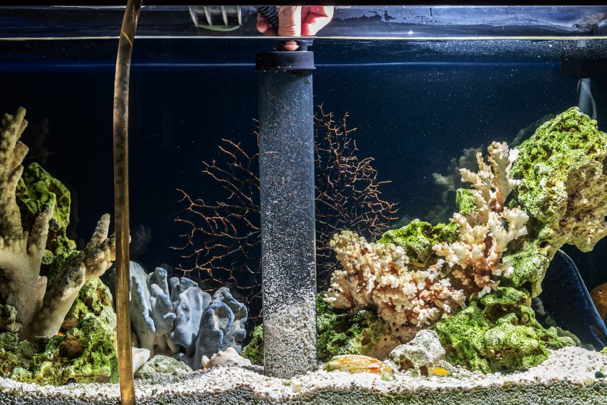 Maintaining a clean fish tank with frequent water changes is a key to preventing fin rot and other fish diseases.