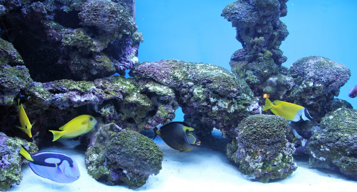 A beautiful coral reef aquarium is shown in this image. An appropriate water flow for adequate filtration is important for freshwater and saltwater aquariums.