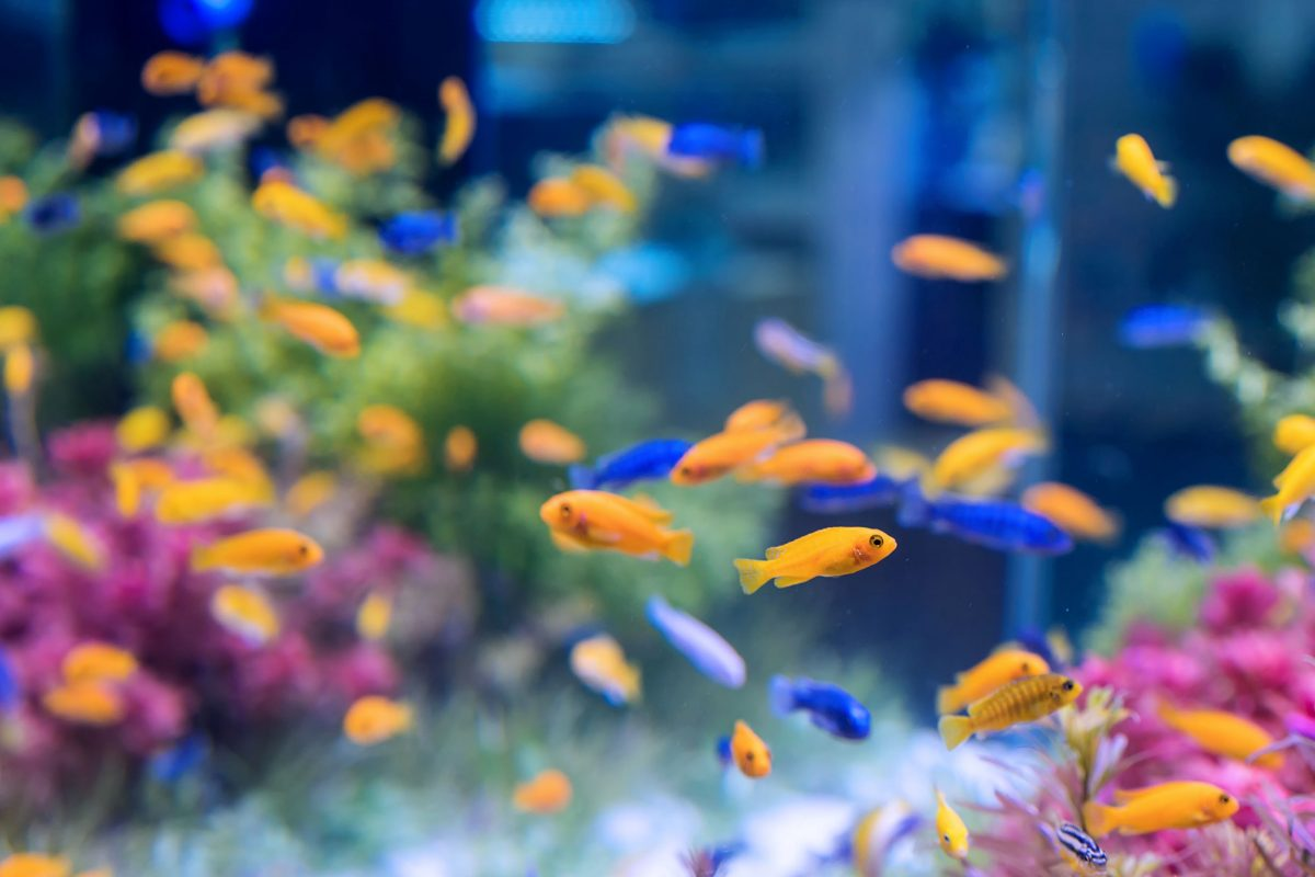 RODI water vs RO water is based on an extra step in fish tank water filtration.